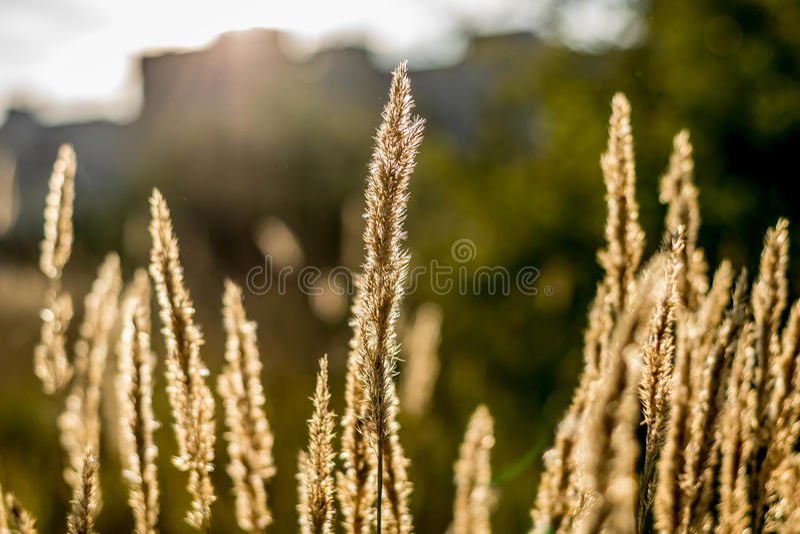 Piante nell'ambito della luce solare luminosa fotografia stock