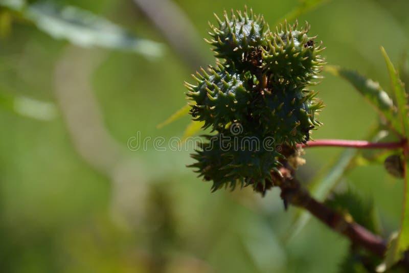 Piante nella città di Kfar Sava fotografia stock libera da diritti