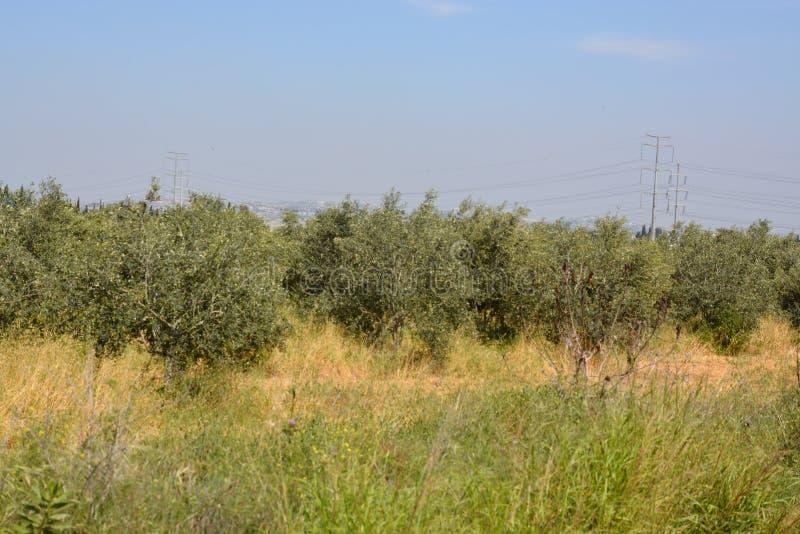 Piante nella città di Kfar Sava fotografie stock libere da diritti