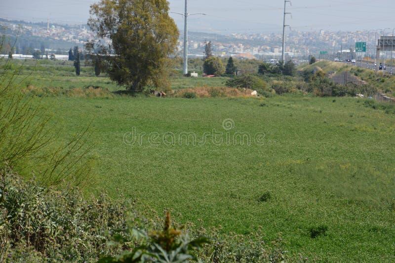 Piante nella città di Kfar Sava immagini stock libere da diritti