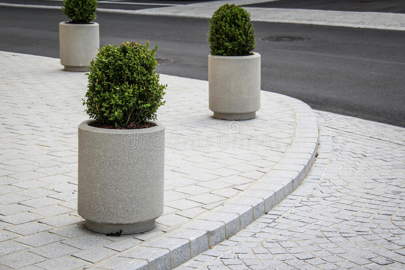 Piante ornamentali sul marciapiede fotografia stock