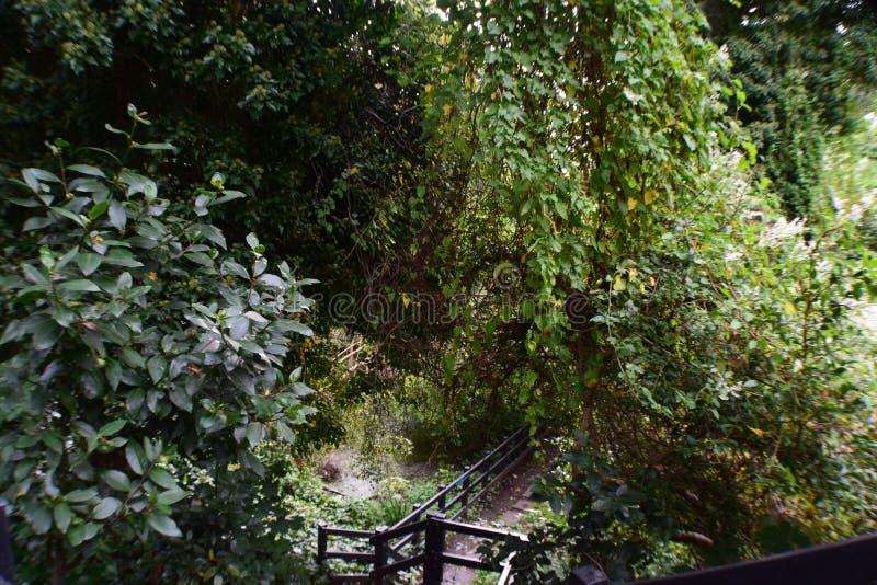 Piante, recinto di legno And Lake fotografia stock libera da diritti