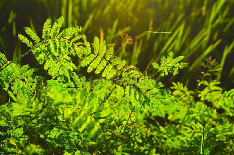 Piante selvatiche immagine stock immagine di piante for Piante di lamponi acquisto