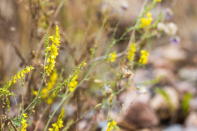 Piante selvatiche e fiori di autunno nel campo vago immagine stock libera da diritti