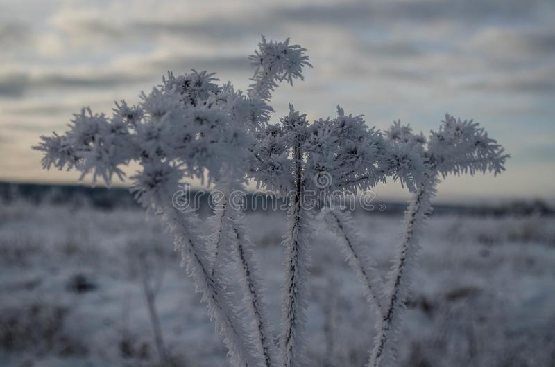 Piante selvatiche nel gelo sui precedenti del cielo di autunno fotografia stock libera da diritti
