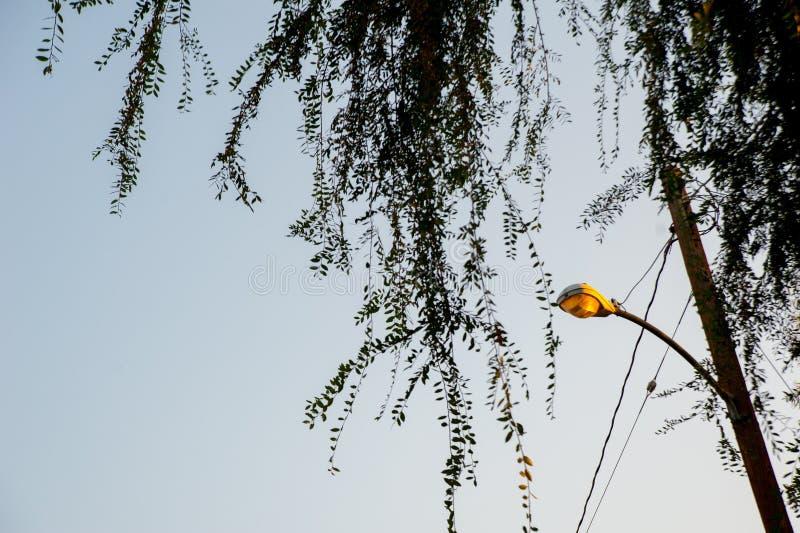 Piante sul cielo di Long Beach, California La California è conosciuta con un buon se situato negli Stati Uniti Nell'ora legale, i fotografia stock libera da diritti