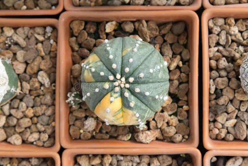 Piante tropicali del cactus fotografia stock