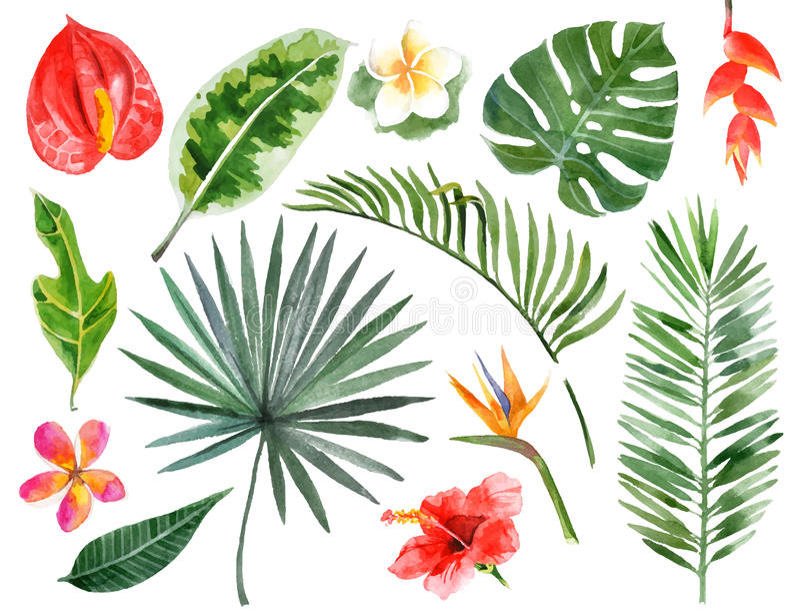 Piante tropicali dell'acquerello disegnato a mano fotografia stock