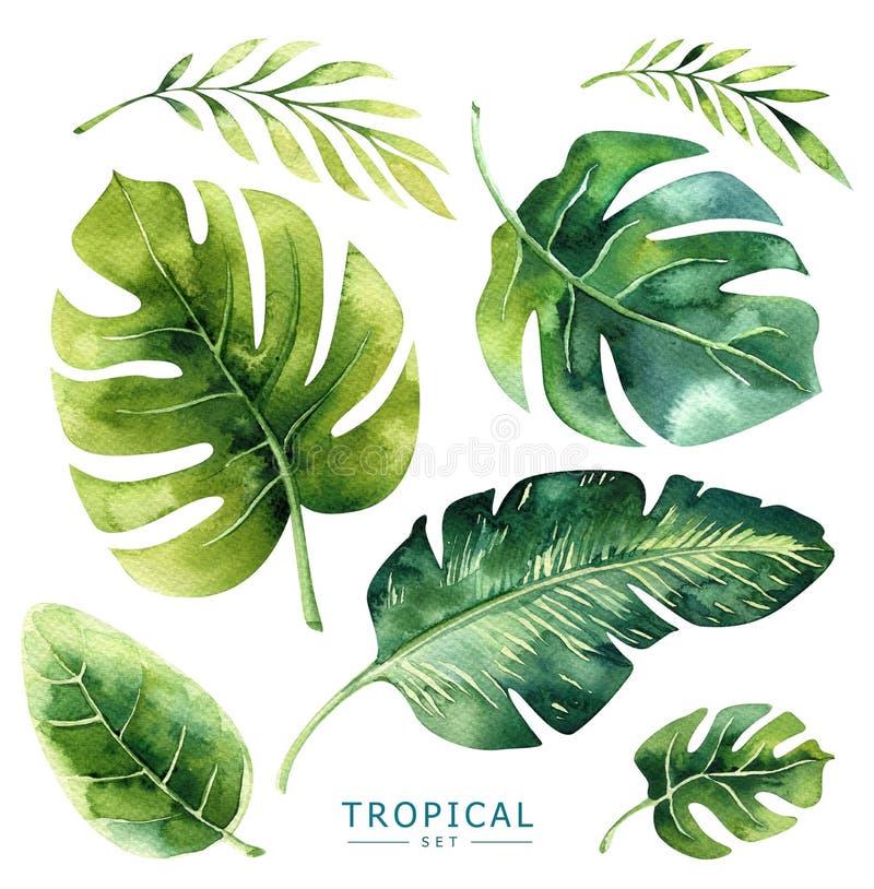 Piante tropicali dell'acquerello disegnato a mano messe Foglie di palma esotiche, J royalty illustrazione gratis