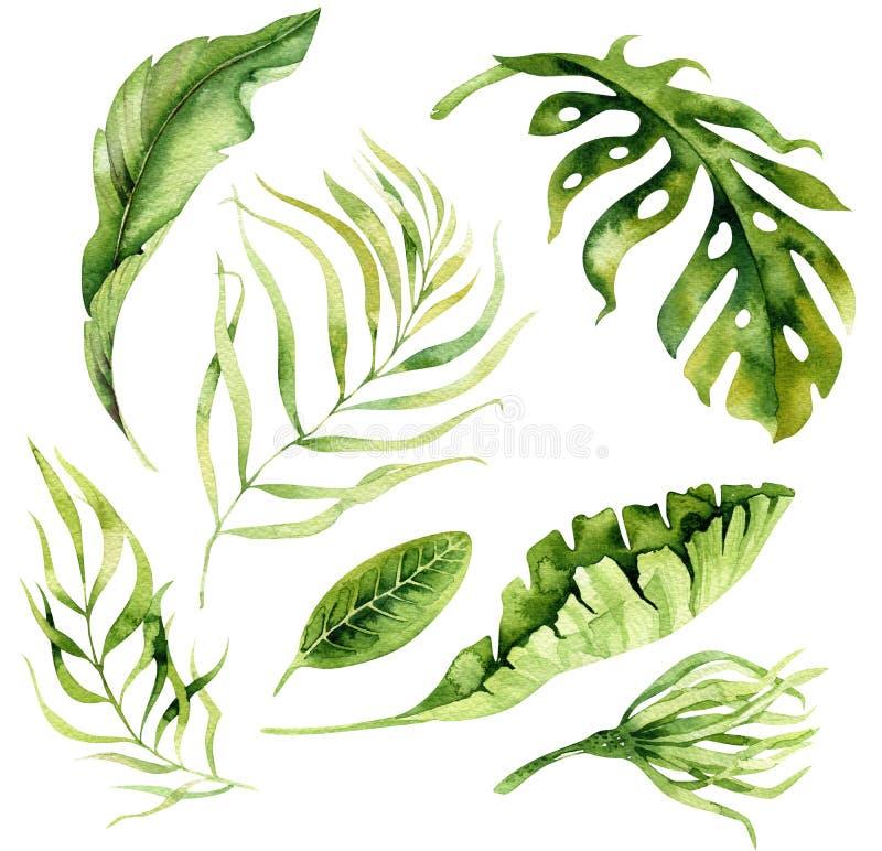 Piante tropicali dell'acquerello disegnato a mano messe Foglie di palma esotiche, J illustrazione vettoriale