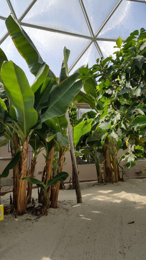 Piante tropicali di Biodome fotografia stock