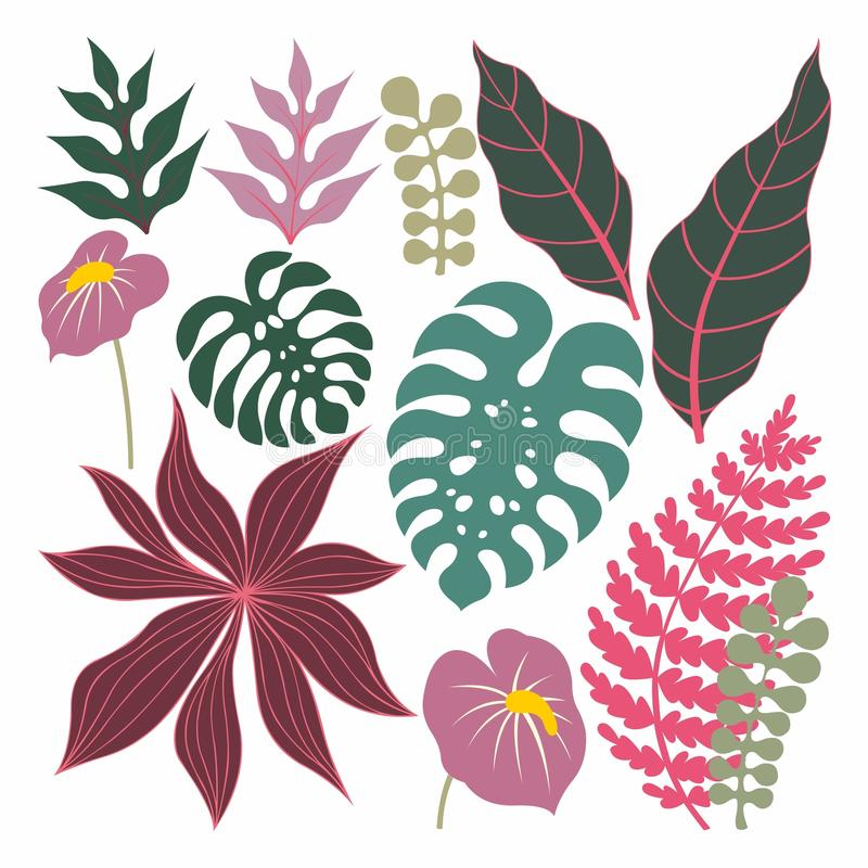 Piante tropicali e foglie Insieme di vettore illustrazione vettoriale