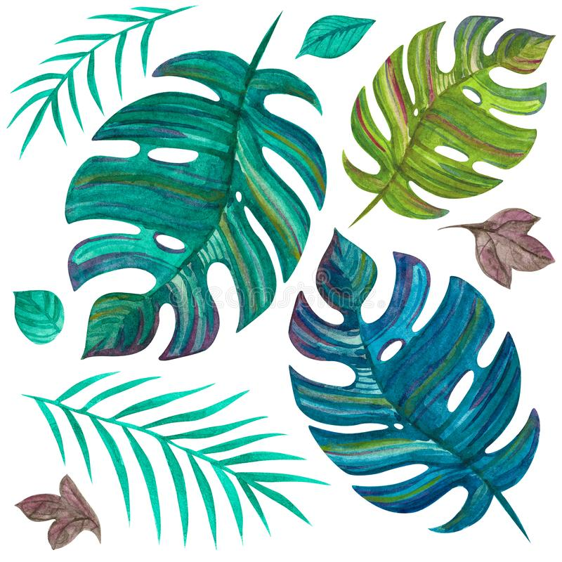 Piante tropicali Foglie Giungla verde insieme dell'acquerello illustrazione di stock