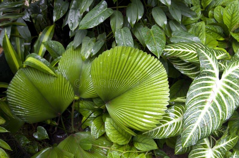 Piante tropicali in giardino botanico Singapore fotografie stock