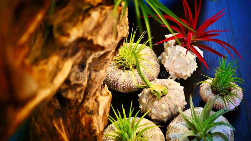 Piante tropicali, piccole piante in vaso fotografie stock