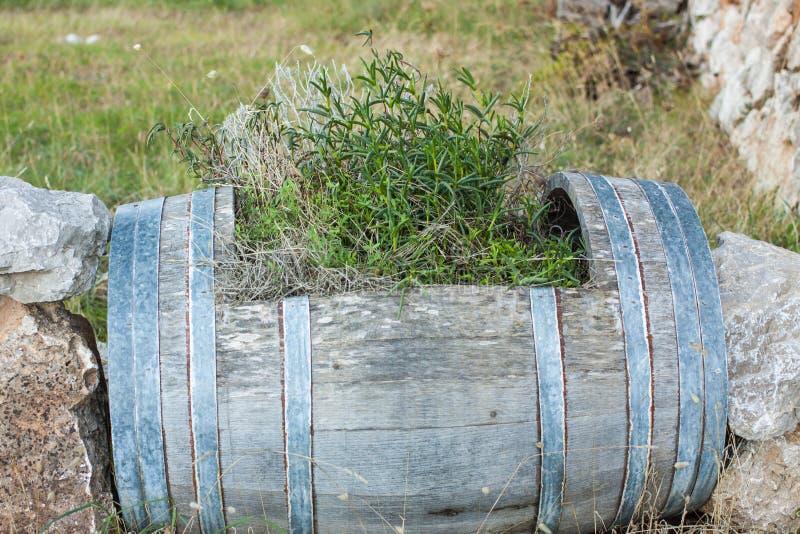 Piante in un barilotto di legno immagine stock libera da diritti