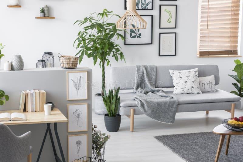 Piante in un interno grigio del salone con un sofà, una collezione di arte e uno scrittorio Foto reale immagine stock libera da diritti
