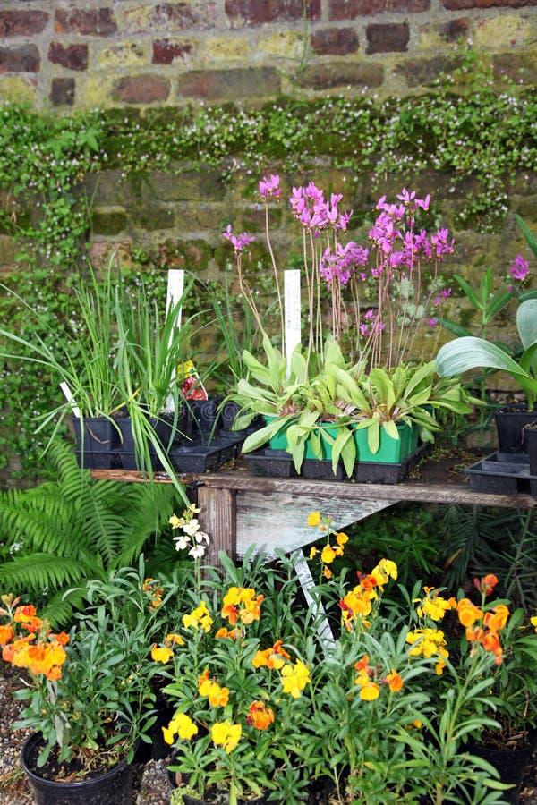 Piante in vaso ed erbe in un giardino immagini stock libere da diritti