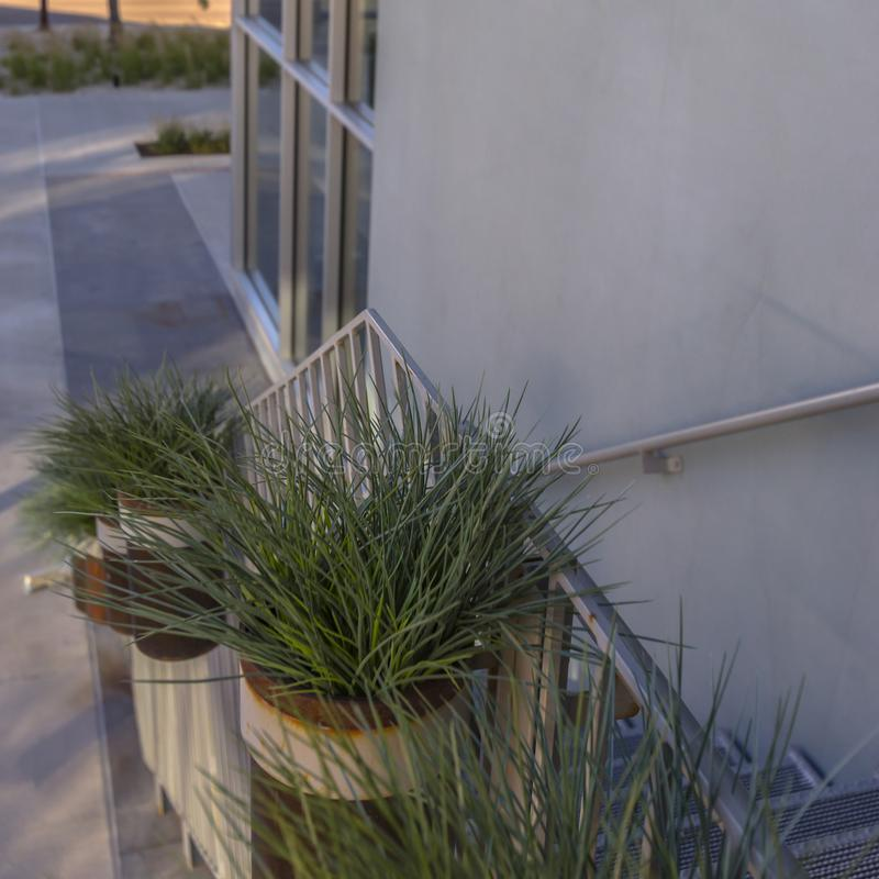 Piante in vaso sulle scale di una costruzione moderna fotografia stock
