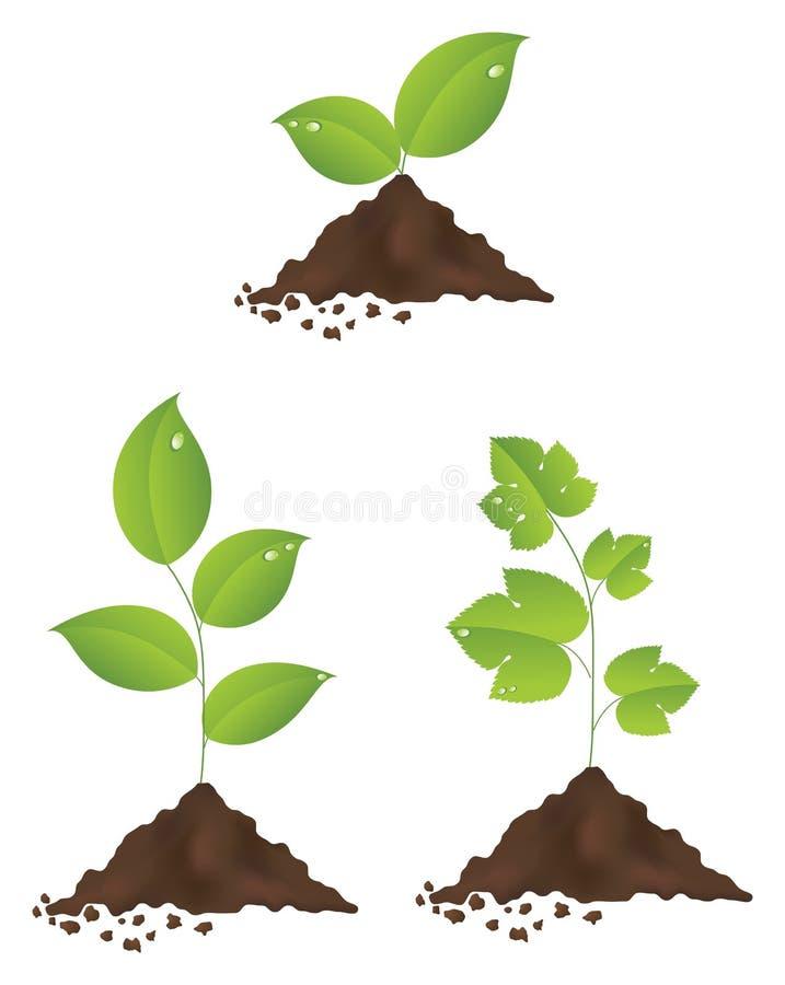 Piante verdi illustrazione di stock