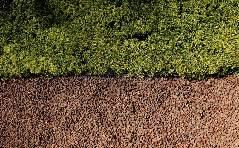 Piante verdi come fondo della natura immagine stock libera da diritti