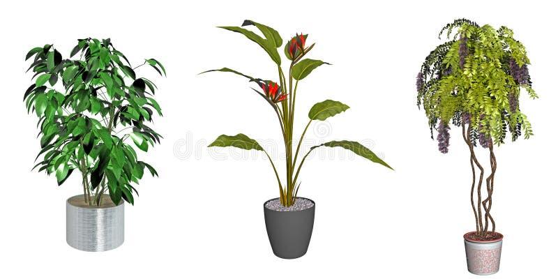 Piante verdi decorative illustrazione di stock for Piante decorative