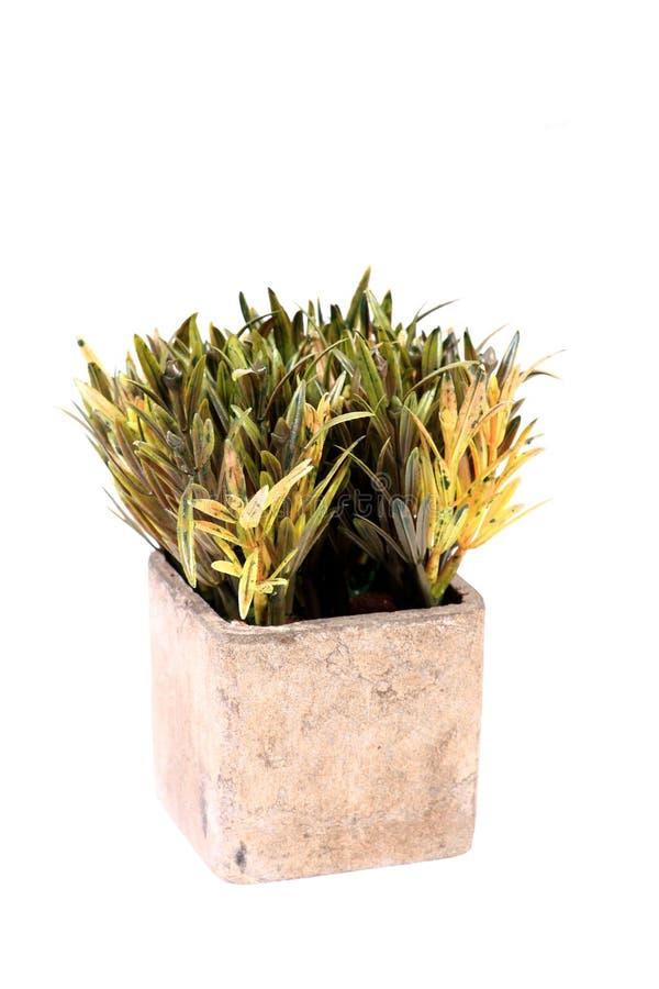 Piante verdi dell'interno fotografia stock. Immagine di ...
