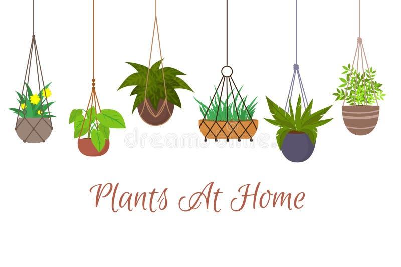 Piante verdi dell'interno in vasi che appendono sull'insieme decorativo di vettore dei ganci del macramè illustrazione vettoriale