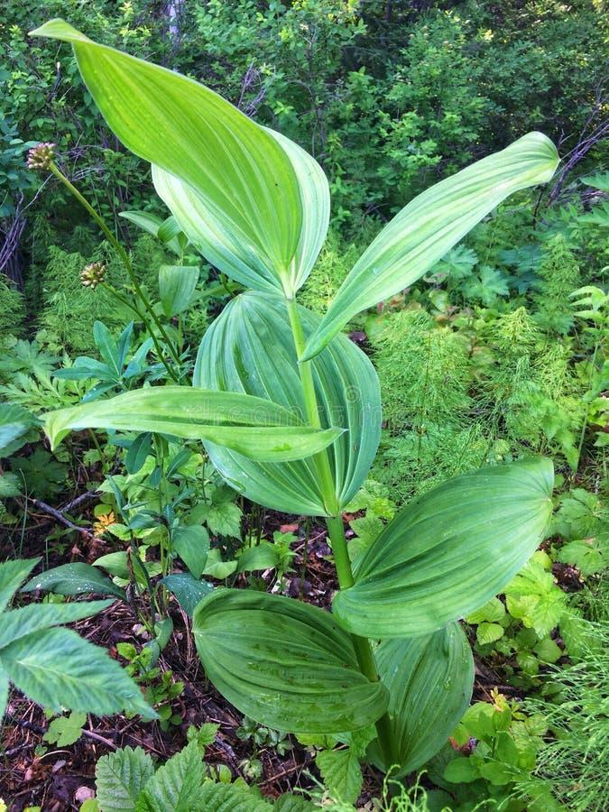 Piante verdi della foresta fotografia stock