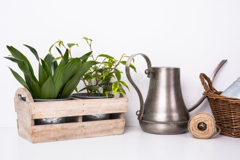 Piante verdi domestiche in scatola di legno immagini stock