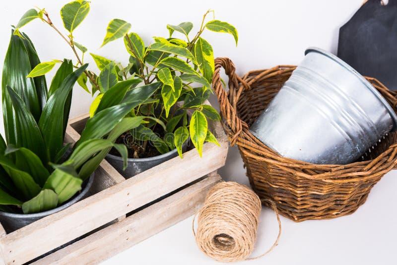 Piante verdi domestiche in scatola di legno immagini stock libere da diritti