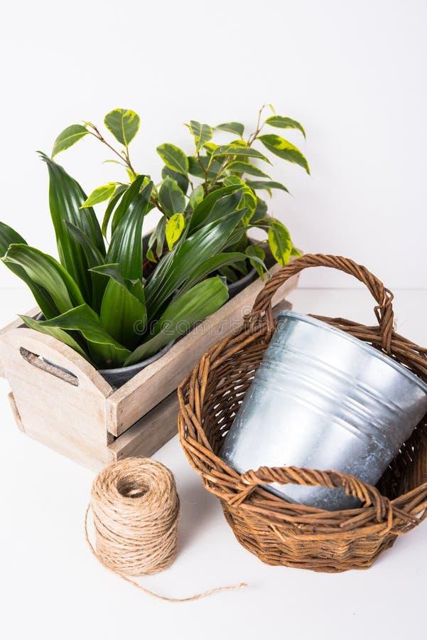 Piante verdi domestiche in scatola di legno fotografie stock