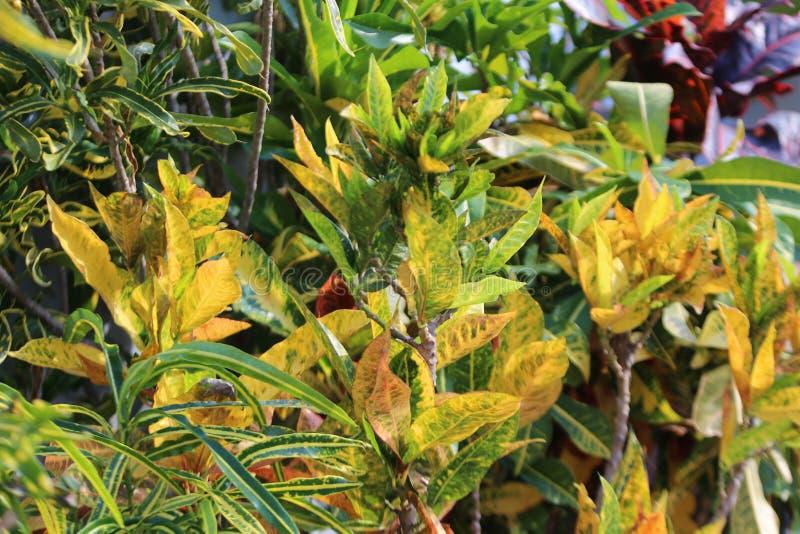 Piante verdi giallastre esposte a luce solare fotografie stock libere da diritti
