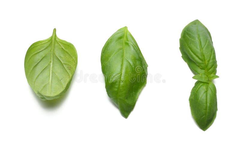 Piante verdi isolate su fondo bianco, proprietà aromatiche della foglia della menta della menta piperita di forti denti fotografie stock