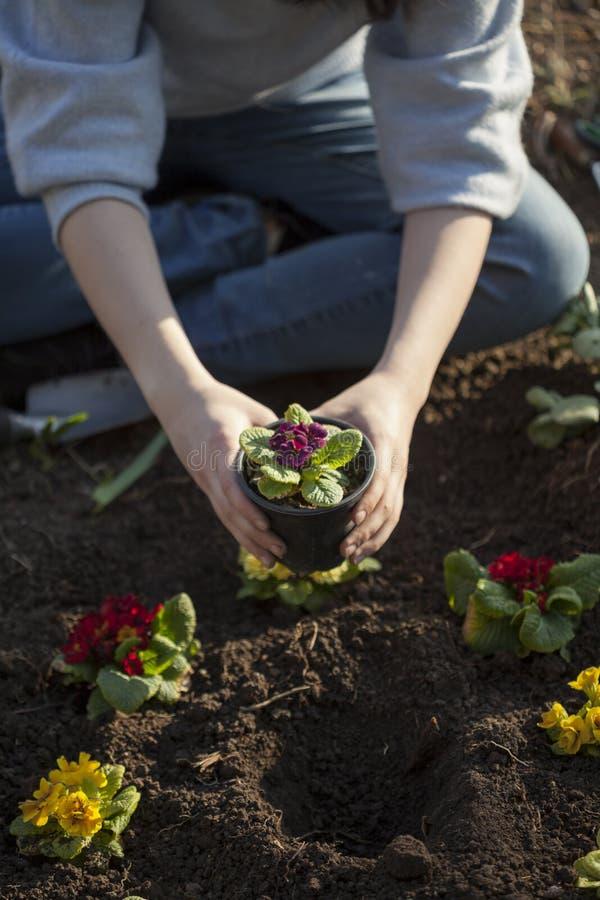 Pianti il fiore fotografie stock libere da diritti