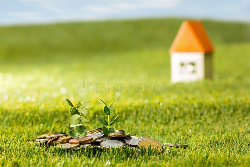 Pianti la crescita in barattolo di vetro delle monete per soldi su erba verde fotografia stock