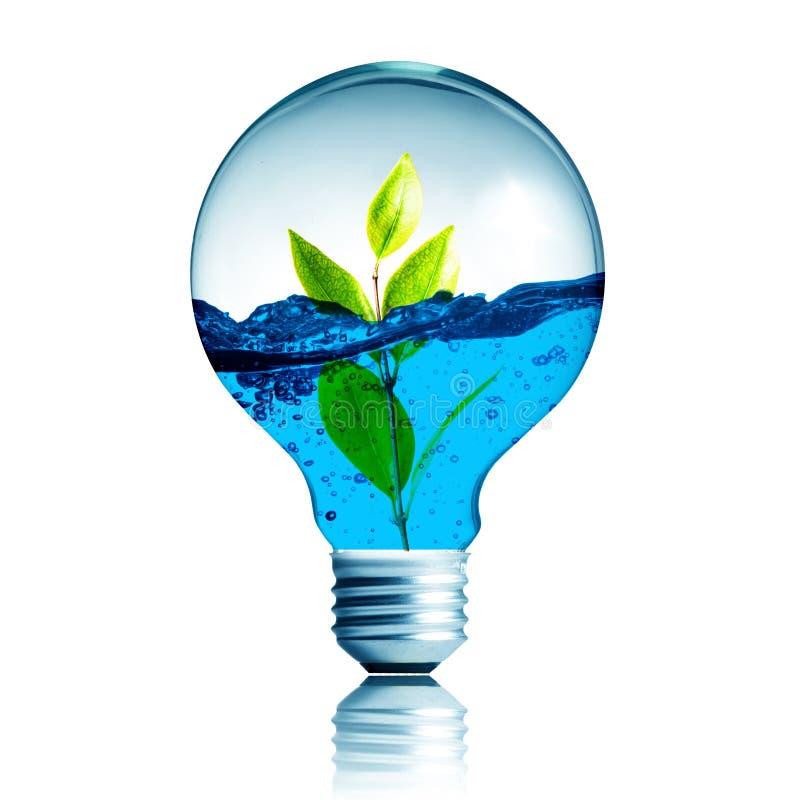 Pianti la crescita con acqua all'interno della lampadina fotografie stock libere da diritti