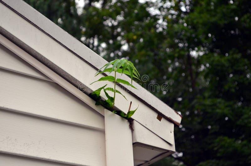 Pianti la crescita da sotto una disposizione dell'intradosso del ` s del tetto nel Michigan fotografia stock