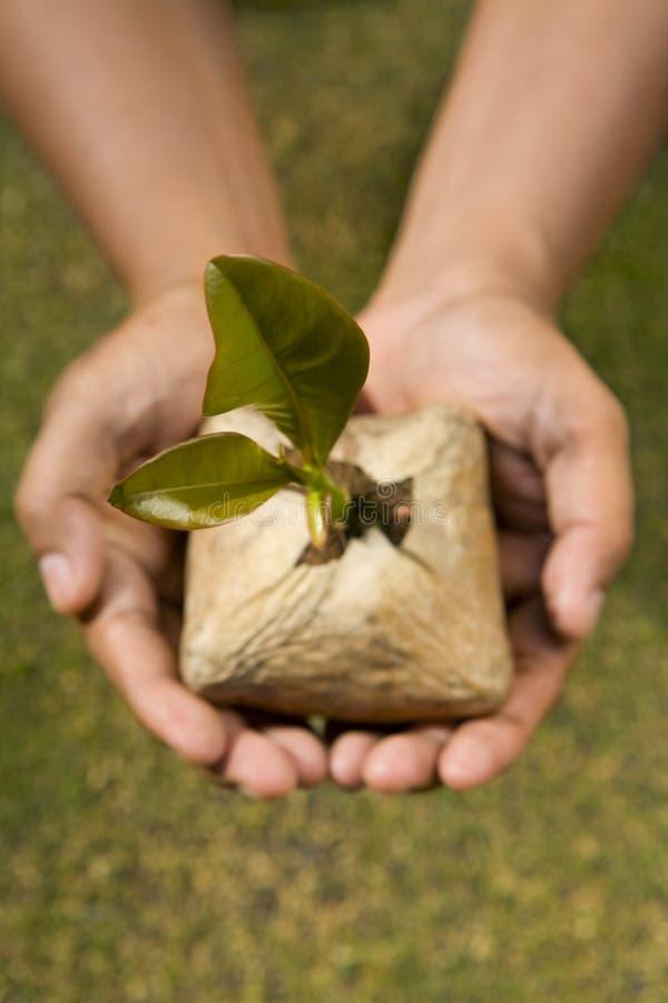 Pianti questo seme dell'albero fotografia stock