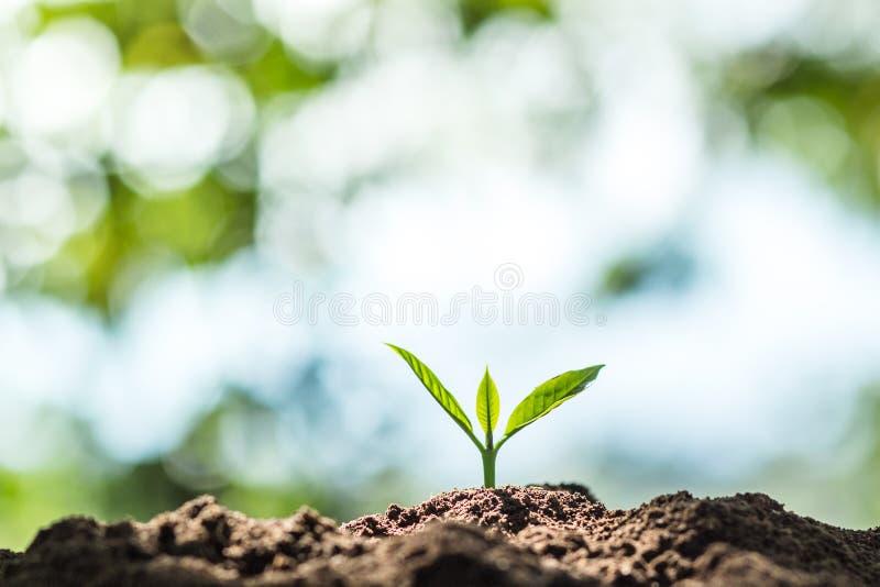 Pianti un albero in natura fotografia stock