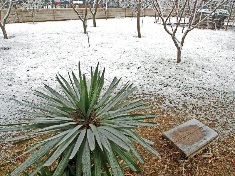 Piantina della palma coperta di neve immagini stock libere da diritti