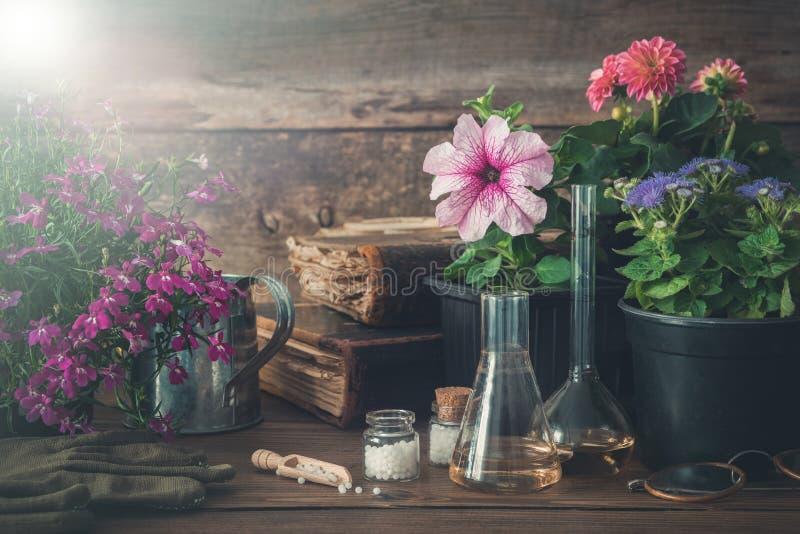 Piantina delle piante e fiori di giardino, vecchi libri e rimedi omeopatici alle piante fotografie stock