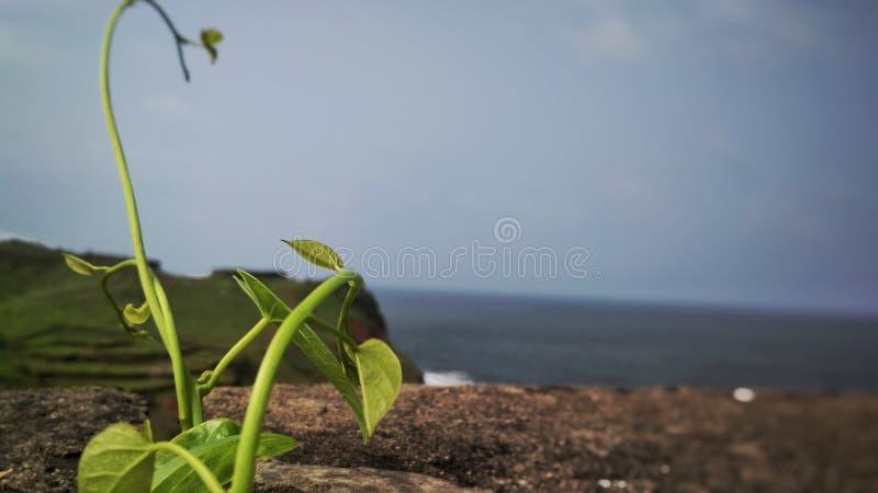 Piantina su roccia asciutta fotografia stock libera da diritti