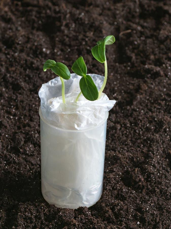 Piantine crescenti senza terra in carta su un fondo del suolo fotografia stock libera da diritti