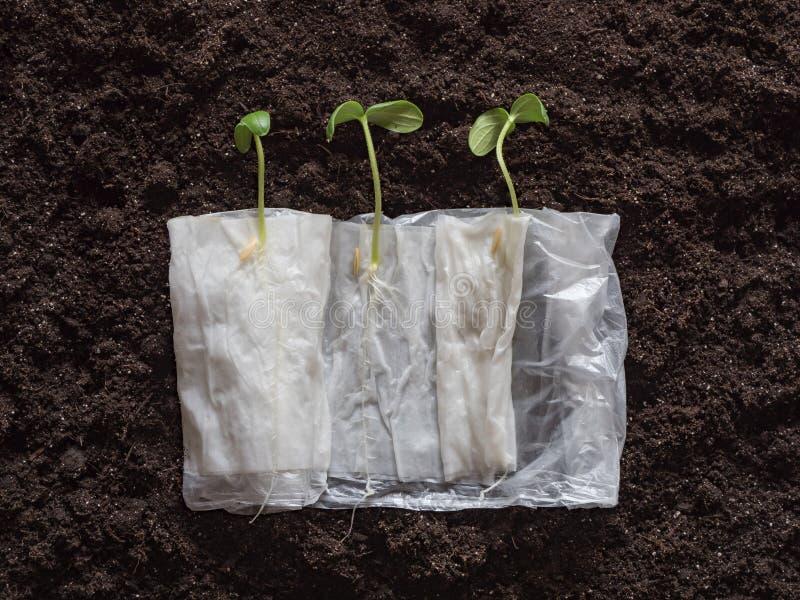 Piantine crescenti senza terra in carta su un fondo del suolo immagini stock