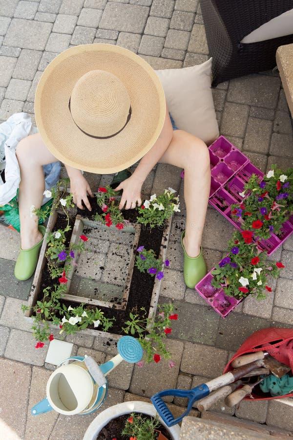 Piantine di trapianto della scuola materna del giardiniere della donna fotografia stock libera da diritti
