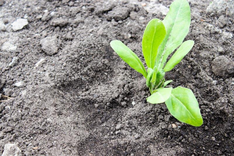 Piantine verdi piantate nella terra C'? un posto per testo immagini stock