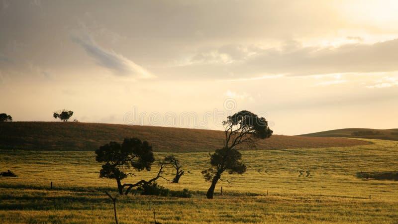 Pianure dell'Australia del sud fotografia stock libera da diritti