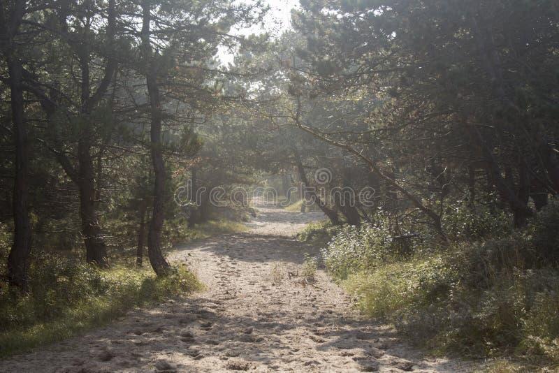 Piasek ścieżka prowadzi w drewna zdjęcia royalty free