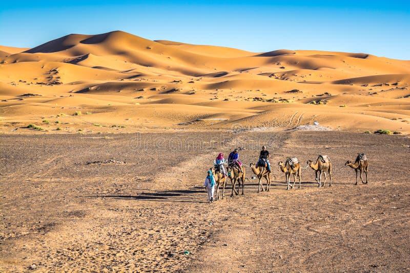 Piasek diun erg Chebbi z wielbłądami blisko Merzouga w Maroko zdjęcia stock
